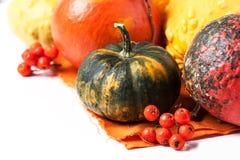 Herbstminikürbise Stockfoto