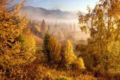 Herbstmorgen im Gebirgstal Stockfotografie