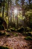Herbstmorgen im Wald lizenzfreie stockbilder