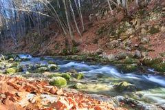 Herbstmorgen nahe dem Fluss Lizenzfreie Stockbilder