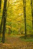 Herbstmorgen am Park Lizenzfreies Stockfoto