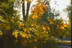 Herbstmorgen am Park Stockbild