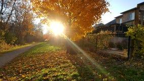 Herbstnachmittagsspaziergang stockbild