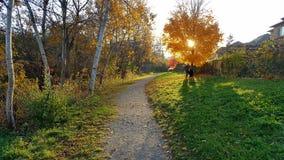 Herbstnachmittagsspaziergang Stockfotografie