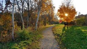 Herbstnachmittagsspaziergang Stockbilder