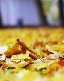 Herbstnatur: Gelb gefallene Blätter im Park Stockbilder