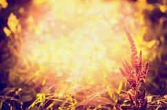 Herbstnatur im Garten oder im Park über Sonnenunterganglicht, unscharfer Naturhintergrund Stockfoto