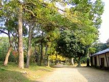 Herbstnatur, Ninnaji Tempel arbeitet in Kyoto im Garten Stockbild