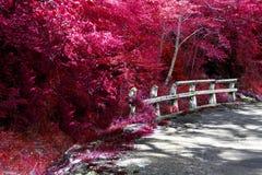 Herbstnatur- und -straßenkurve Straßenrandabzugsgraben Lizenzfreie Stockfotos