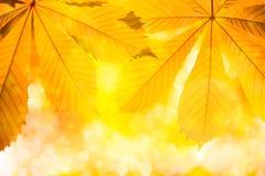 Herbstnaturhintergrund mit Blättern Lizenzfreie Stockfotografie