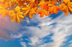 Herbstnaturhintergrund mit freiem Raum für Text - bunte orange Herbstahornblätter gegen drastischen Himmel Lizenzfreies Stockfoto