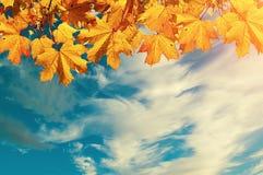 Herbstnaturhintergrund mit freiem Raum für Text - bunte orange Herbstahornblätter gegen Sonnenunterganghimmel Stockbilder