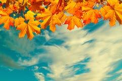 Herbstnaturhintergrund mit Raum für Text - orange Herbstahornblätter gegen Sonnenunterganghimmel Weinlesefilter angewendet Stockfotografie