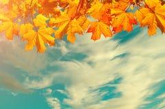Herbstnaturhintergrund mit Raum für Text - orange Herbstahornblätter gegen Sonnenunterganghimmel Weinlesetöne angewendet Lizenzfreie Stockbilder