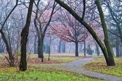 Herbstnebel Stockfotos