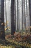 Herbstnebel im Wald Stockfoto