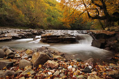 Herbstnebenfluß Lizenzfreie Stockfotografie