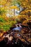 Herbstnebenfluß Stockbild
