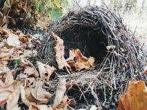 Herbstnest 1 stockfoto