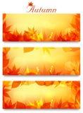 Herbstnetzhintergründe Stockfoto