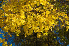Herbstniederlassung mit Blättern Stockbild