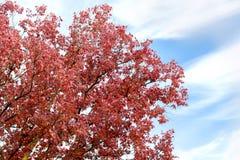 Herbstniederlassung mit roten Blättern Stockfoto