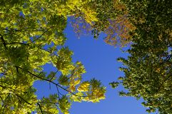 Herbstniederlassungen Stockfoto