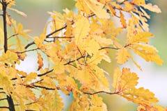 Herbstniederlassungen Lizenzfreie Stockfotos