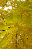 Herbstniederlassungen Stockbild
