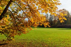 Herbstniederlassungen einer Kastanie Lizenzfreies Stockfoto