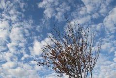 Herbstniederlassungen mit blauem Himmel und Wolken Stockfotografie