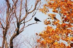 Herbstniederlassungen und -bäume mit Blättern Stockbilder