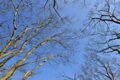 Herbstniederlassungen von Bäumen gegen den Himmel Lizenzfreies Stockfoto