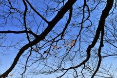 Herbstniederlassungen von Bäumen gegen den Himmel Stockfotos