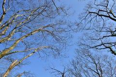 Herbstniederlassungen von Bäumen gegen den Himmel Lizenzfreie Stockbilder