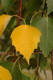 Herbstnoten Lizenzfreies Stockfoto