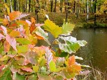 Herbstpalette lizenzfreie stockfotos