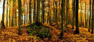 Herbstpanorama Stockfoto