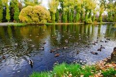 Herbstpark Stockfoto