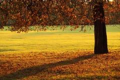 Herbstpark Stockfotos