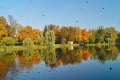 Herbstpark, der Teich - schöne Herbstlandschaft Stockbilder