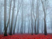 Herbstpark im nebeligen Wetter - Herbstlandschaftsansicht des nebeligen Parks des Herbstes Lizenzfreie Stockfotografie