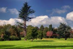 Herbstpark mit Bäumen lizenzfreies stockfoto