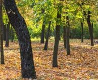 Herbstpark mit Bäumen und gefallenen gelben Blättern lizenzfreie stockfotos