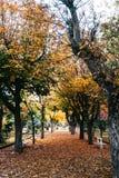 Herbstpark mit goldenen Bäumen stockbild