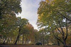 Herbstpark mit großen Bäumen Stockbild