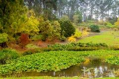 Herbstpark mit Teich Stockfoto