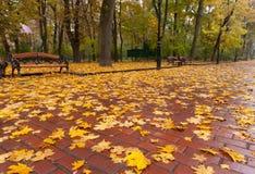 Herbstpark. Regnerisches Wetter Lizenzfreies Stockfoto