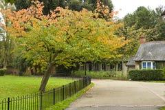 Herbstpark in Surrey, Großbritannien Stockbilder
