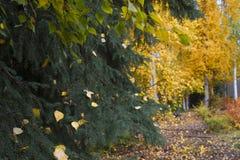 Herbstpark von Alaska, Fragment Stockbilder